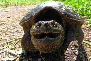 День черепахи